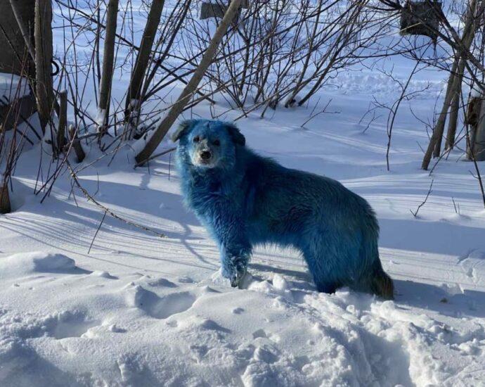 Синие собаки замечены у химзавода в Дзержинске.