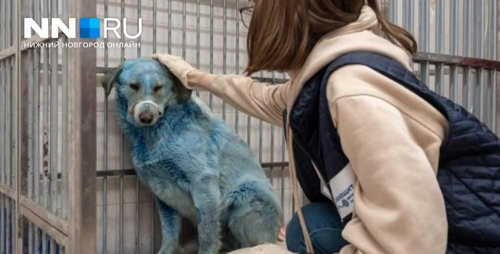 Собаки цвета берлинской лазури в приюте Нижнего Новгорода.