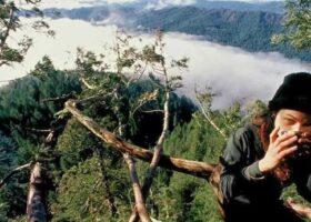 Джулия Хилл, которая два года жила на дереве