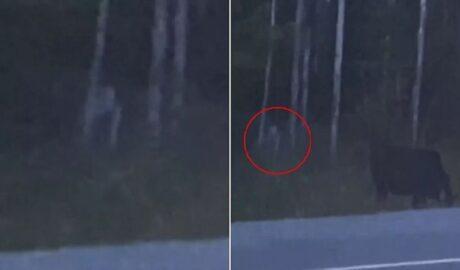 Таинственное существо в лесу? (Разоблачение видео)