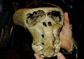 Чужие черепа Кавказских гор