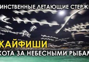 «Летающий стержень»: шпион, НЛО, древние насекомые?