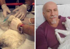 Доктор спасает кота после остановки сердца