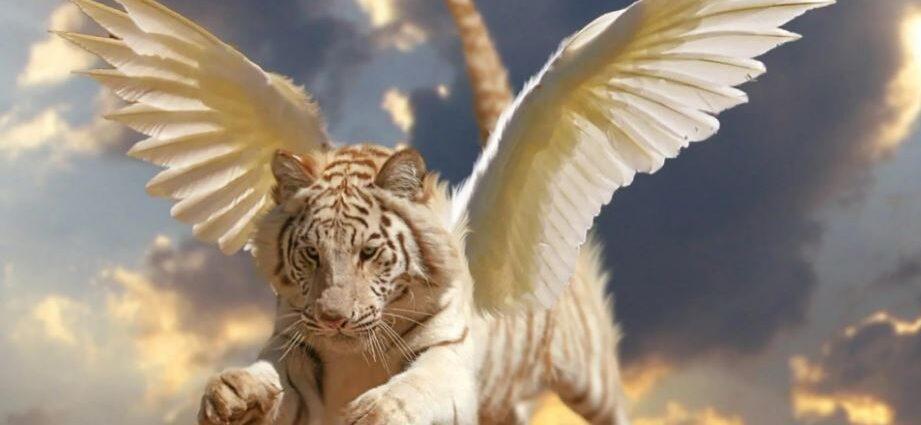 Легенды о животных, как посланников богов.