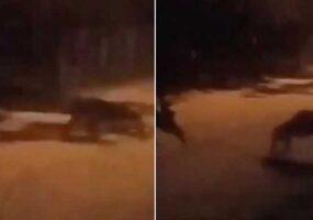Камера зафиксировала ужасное существо в Коста-Рике