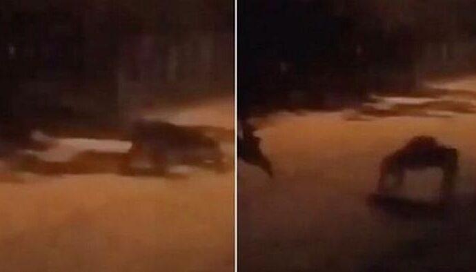 Камера зафиксировала ужасное существо в Коста-Рике.