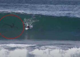 Существо преследует серфера на пляже Сан-Диего