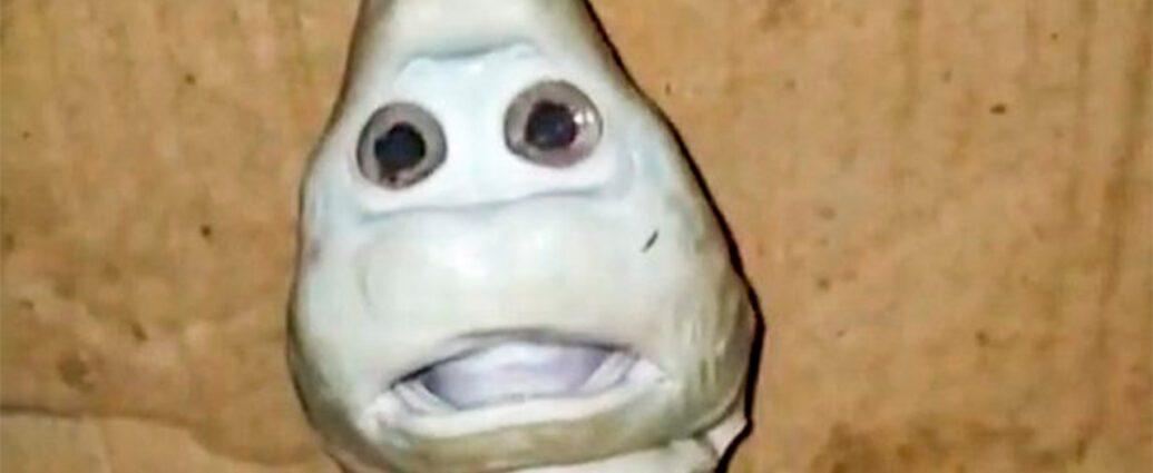 Рыбак поймал детеныша акулы с человеческим лицом.