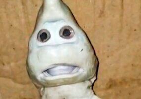 Рыбак поймал детеныша акулы с человеческим лицом