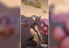 Русалки на пляже США: Тиктокер нашел скелет русалки