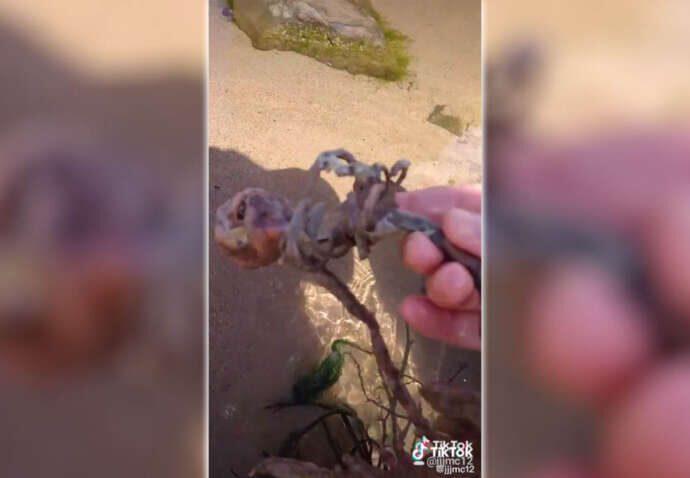 Русалки на пляже США: Тиктокер нашел скелет русалки.