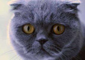 История про кота, который творит чудеса!